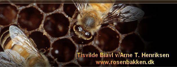 laver hvepse honning